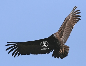 CiF Watch Exclusive: Zionist Spy Vulture gets wings!