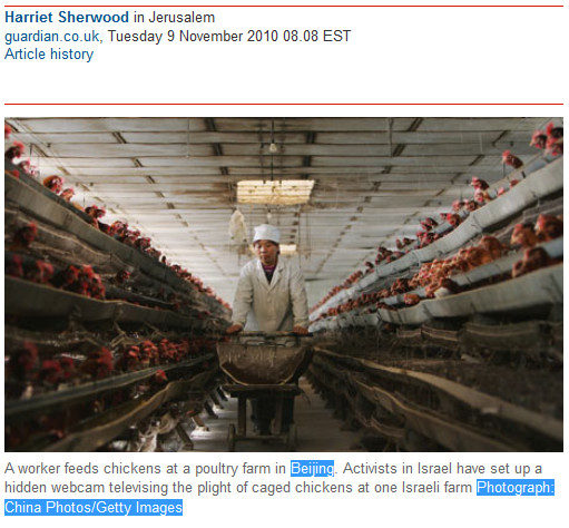 Guardian cancels global memorial service for killed chickens