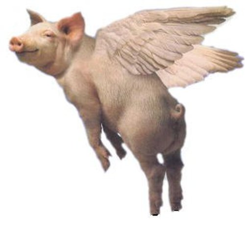 CiF Watch 'When Pigs Fly' Edition: Guardian publishes 100% POSITIVE story about Israel
