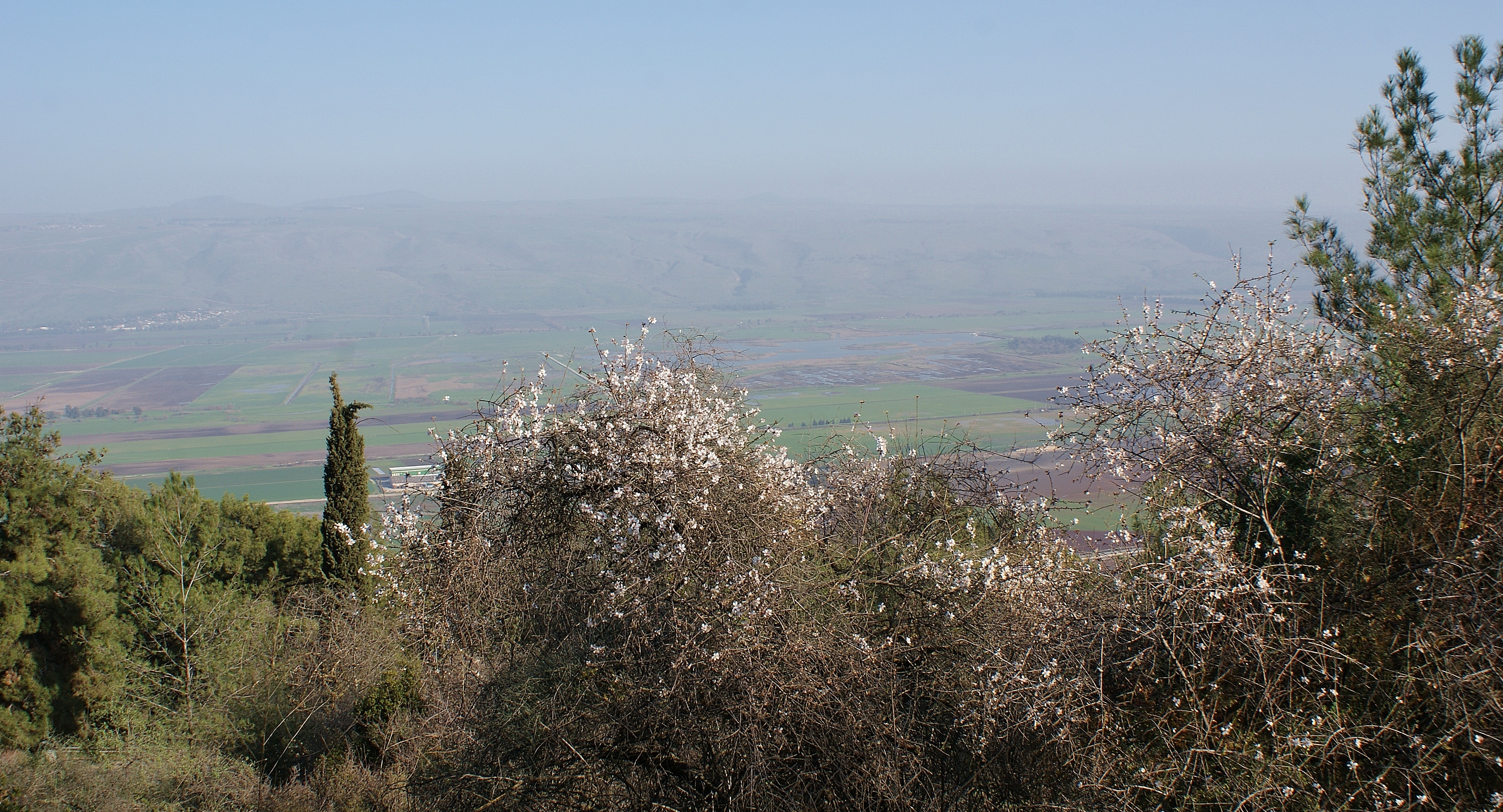Postcard from Israel – Almond blossom