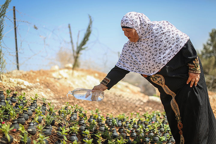 A palestinian woman waters the plants